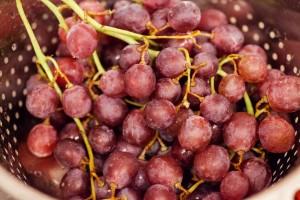 Die Weintrauben werden gründlich gewaschen und abgetropft.