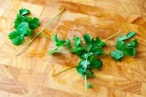 Pimpinelle auch kleiner Wiesenknopf genannt ist eine Zutat für Hessische Grüne Sauce.