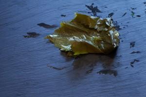 Seitlich wird das Blatt umgeschlagen und das Weinblatt mit moderatem Druck aufgerollt.