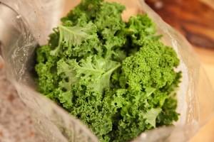 Vom frischen Grünkohl werden die Stiele enfernt und die Grünkohlblätter werden grob geschnitten.